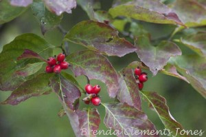 Berries – For The Birds