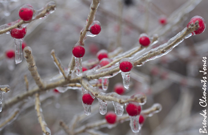 Winterberry, and one of my goals accomplished with a wintery photo of this beautiful shrub!